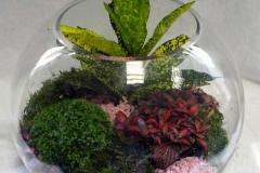 planters (1)
