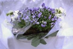 planters (4)